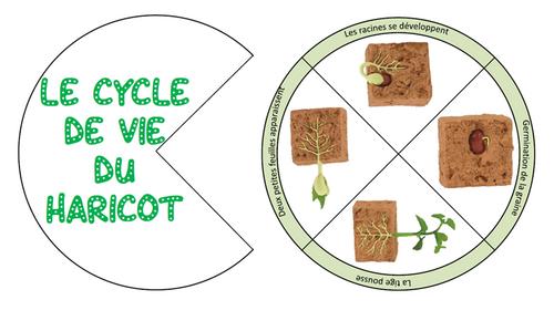 Les roues des cycles de vie