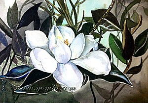magnolia-watercolor-yoyita-s