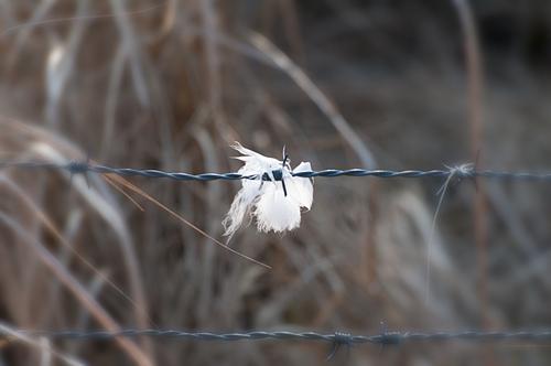 Les plumes sont éternelles
