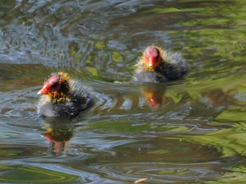 Dans l'autre étang