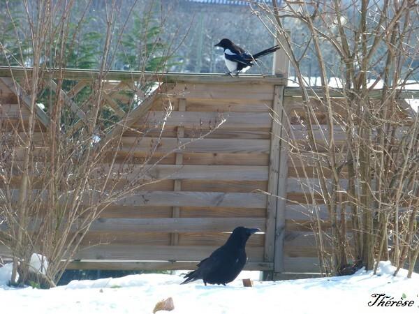 oiseaux--4-.JPG