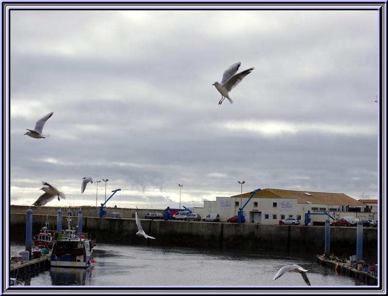 une petite balade sur l'île d'Oléron au port de la Cotinière(17)
