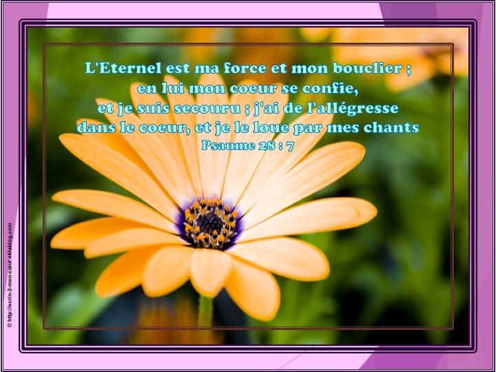 L'Eternel est ma force et mon bouclier - Psaumes 28 : 7