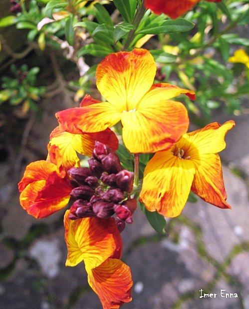 Fleurs-3143.JPG
