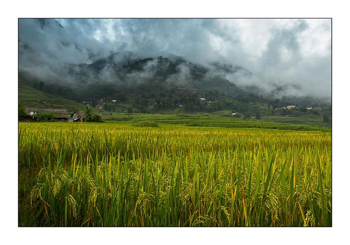 Une rizière par jour