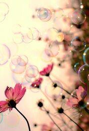 ○ jolies bulles ! ○