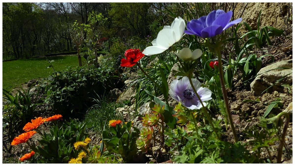 Au jardin de Marithé semaine 12/2014