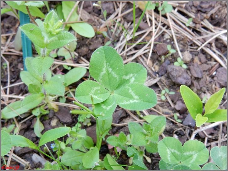 5 feuilles....