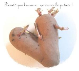 patate aminus 3 avec texte
