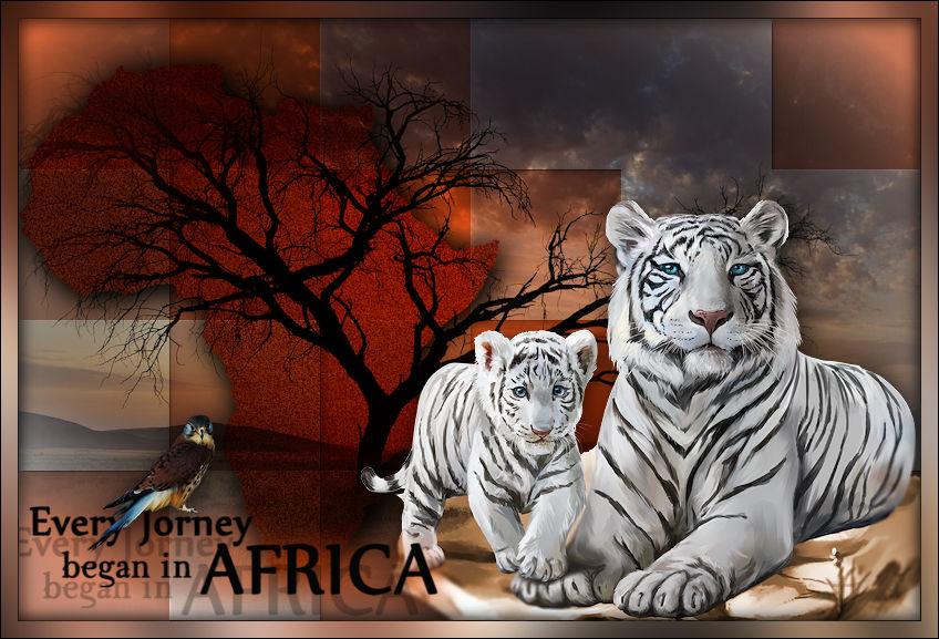 Violine-Afrika-Barbara4.jpg