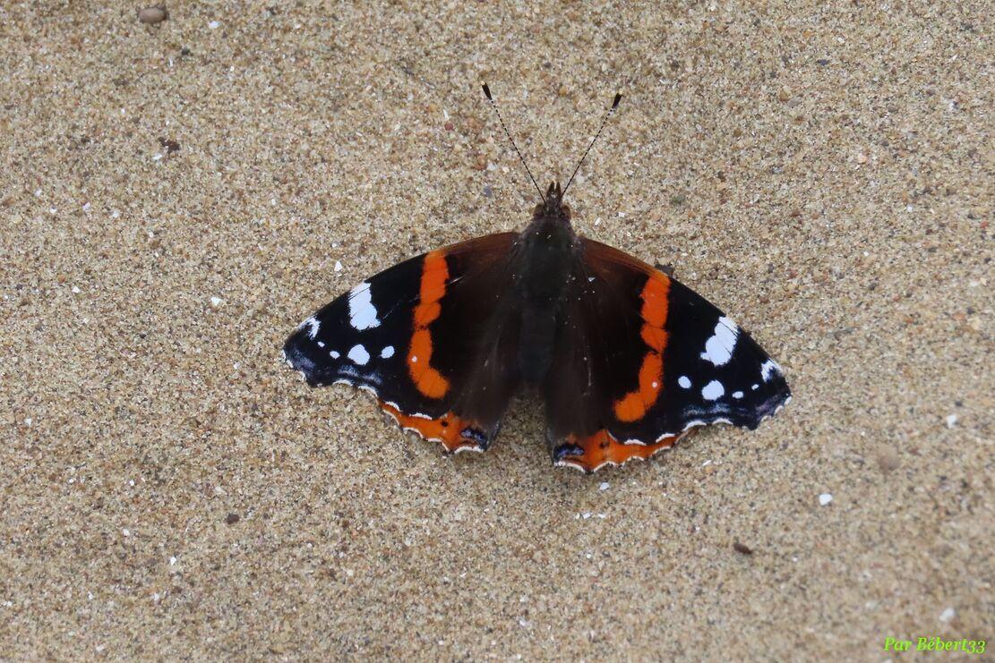 un papillon sur la plage