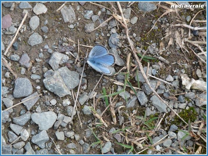 Juin: une couleur : bleu, défi chez khanel.
