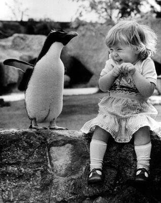 Cartes  Postales  PINGOUINS  et  AUTRES