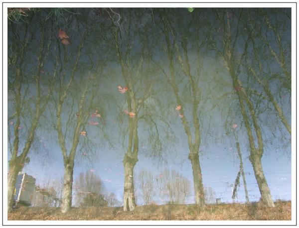 Les arbres flous s'élancent dans un ciel aux couleurs inquiétantes.....