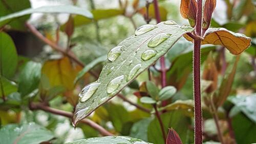 Il pleut : Anne . L   nous fait profiter de ses clichés