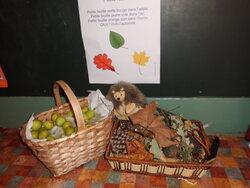 Dégustation de fruits d'automne en Petite Section