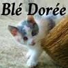 Blé Doré