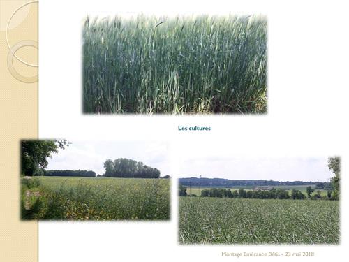 Boucle Bazoches s/ Guyonne - Mareil- Le-Guyon