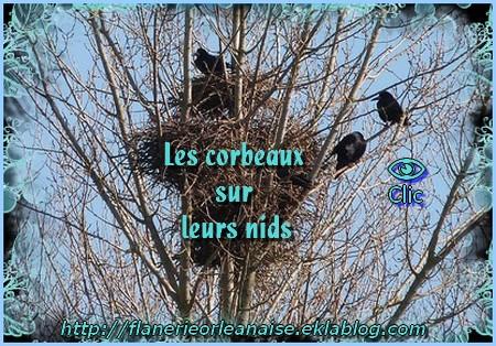 Les corbeaux sur leurs nids