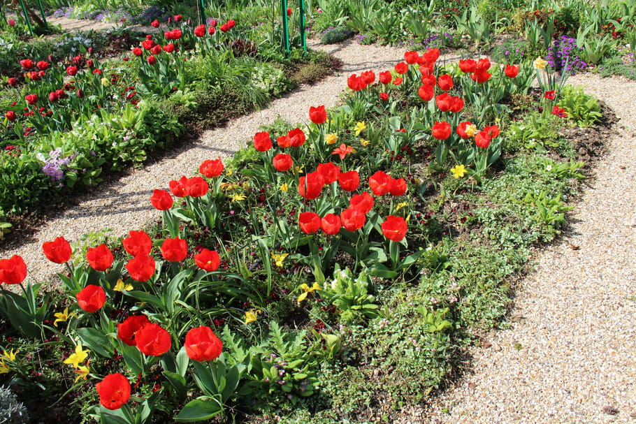 Les plantes qui fleurissent en mars