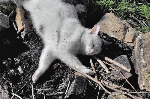 Camouflage charbon de bois