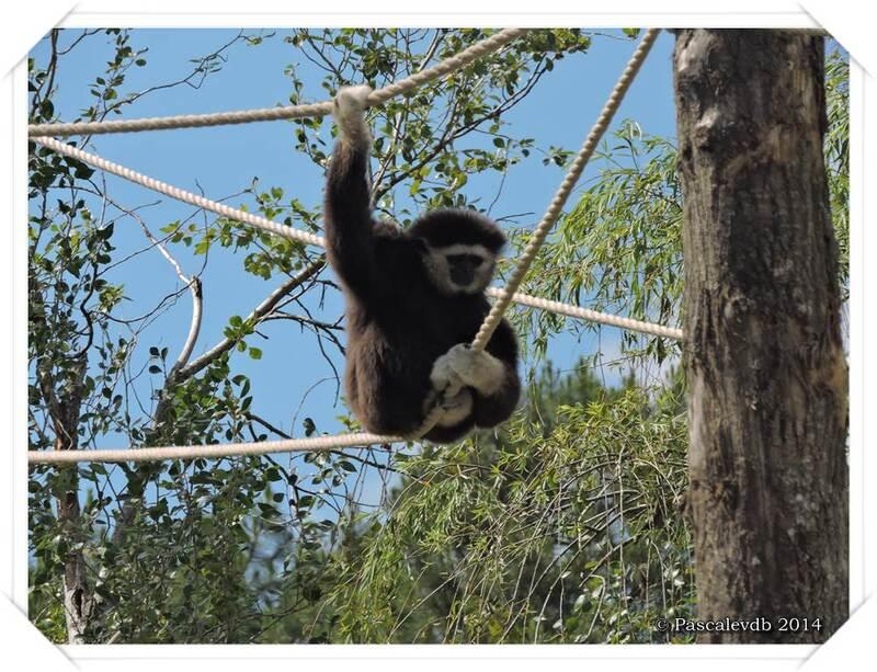 Zoo du Bassin d'Arcachon à La Teste de Buch - 1/20