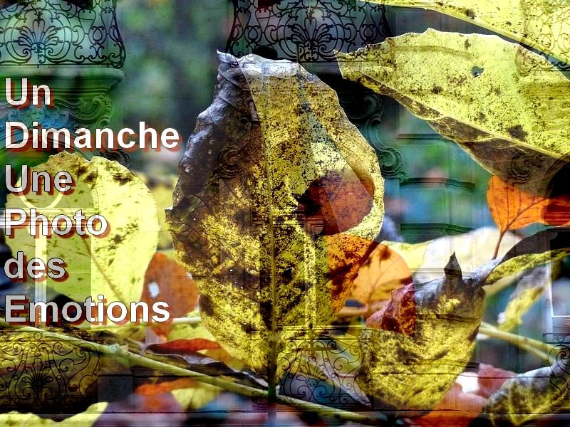 Metz / La photo du dimanche 29 novembre 2015...