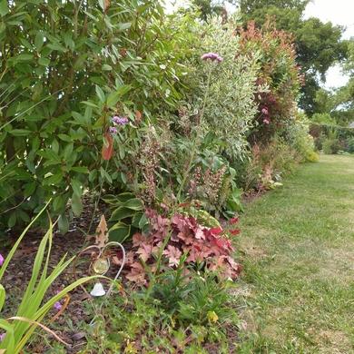 Cocoon Garden...