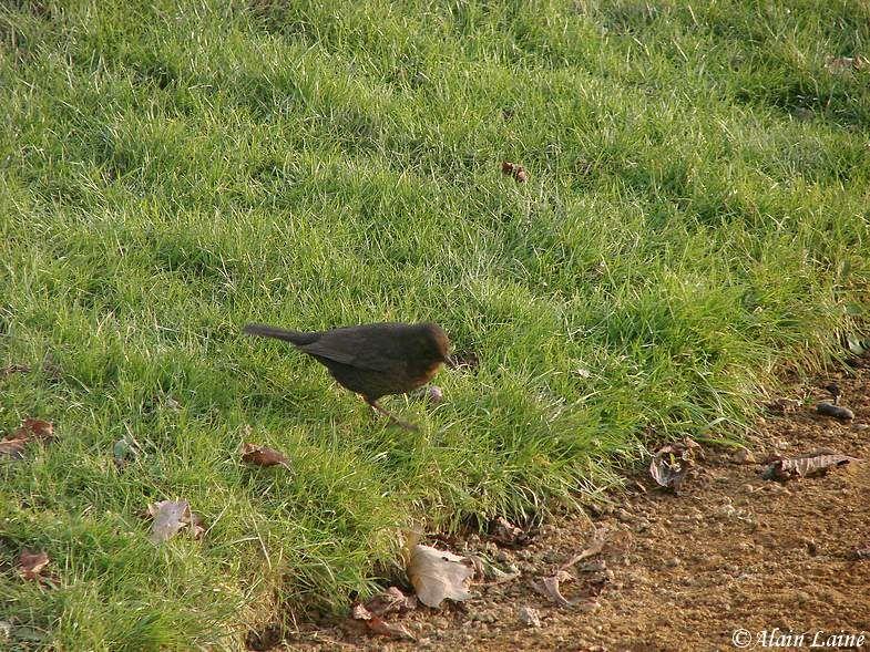 Oiseaux_10Janv09_1