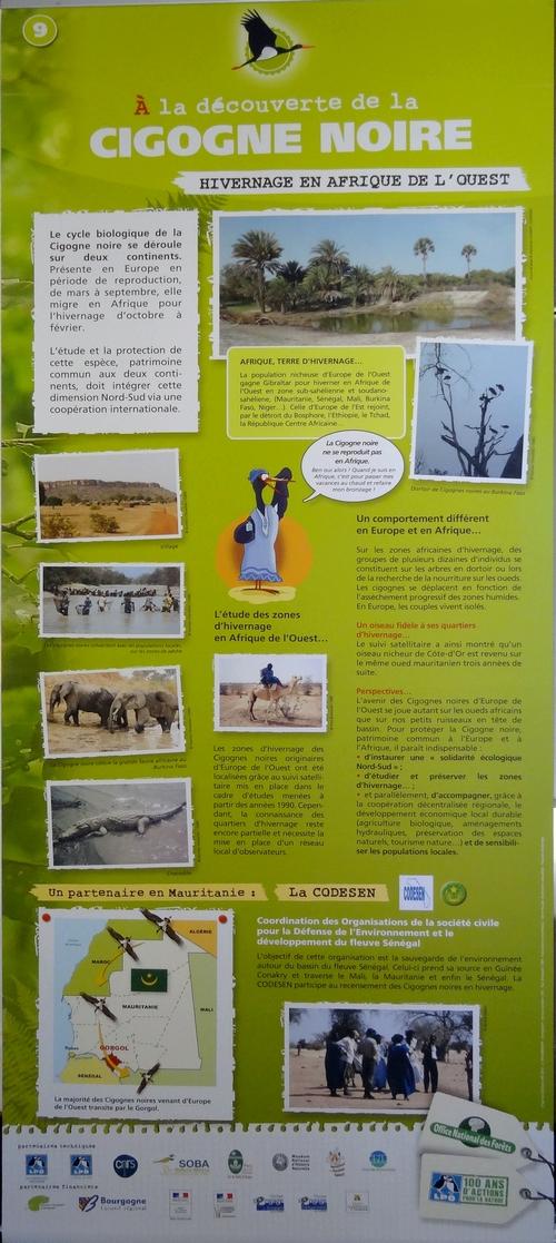 Une exposition sur la cigogne noire est visible au Musée Buffon à Montbard jusqu'au 10 mars 2014