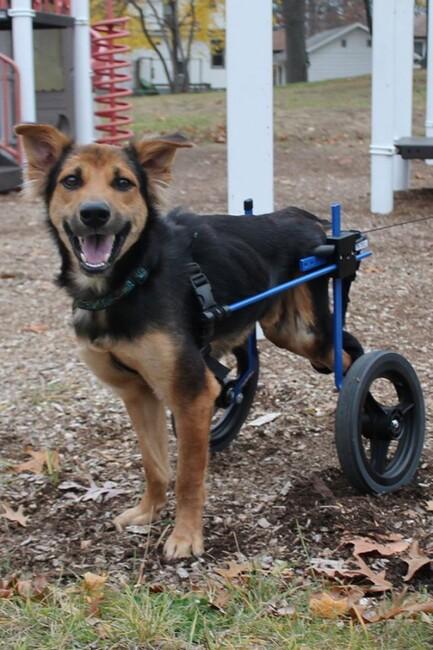 Leo peut enfin marcher avec ce mécanisme, il est très heureux!