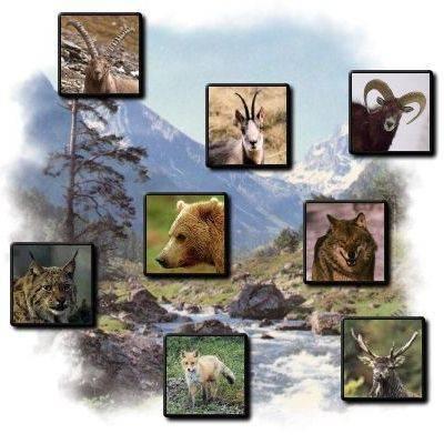 Qu'est-ce qu'un mammifère?