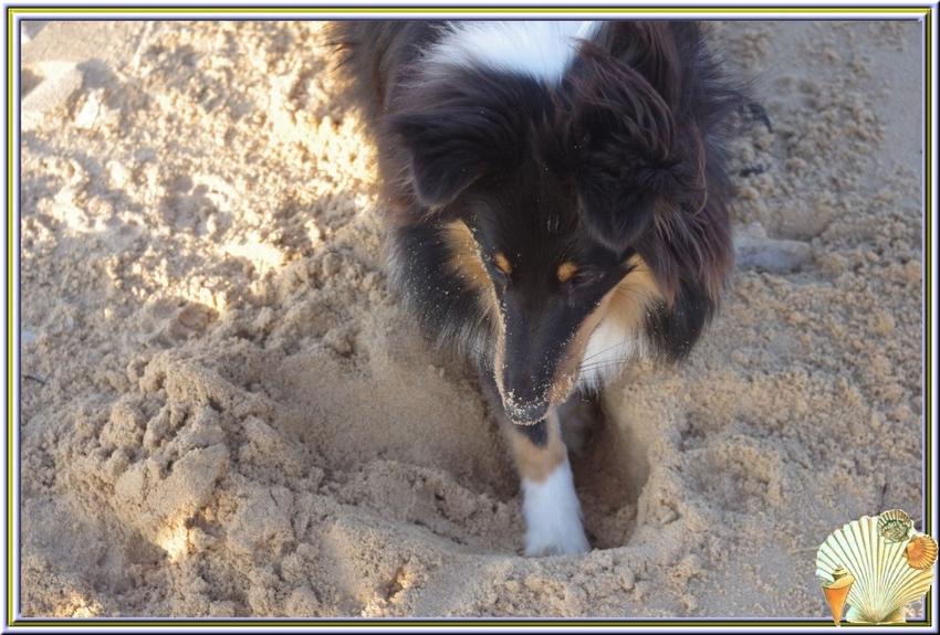 La balade des chiens sur la plage