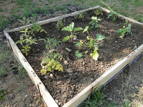 Notre potager et les fleurs du jardin