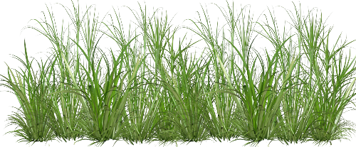 tube pelouse haute
