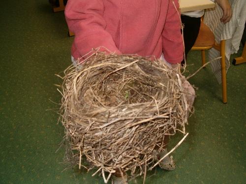 Le nid d'Eva