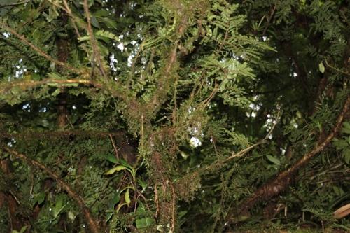 Au-dessus de la canopée sur les ponts suspendus de Monteverde