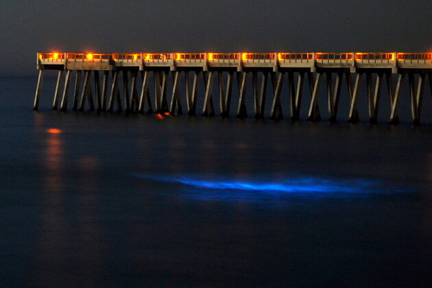 La bioluminescence marine