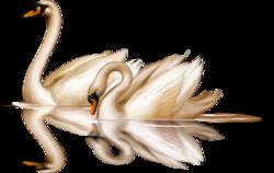 la rose de dédain