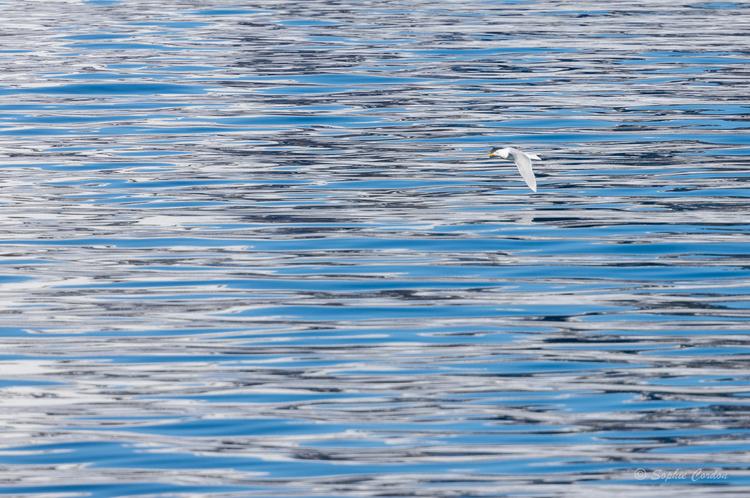 Nordstjernen 19 Mai - Magdalenafjorden