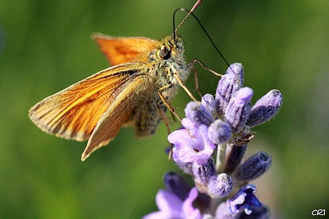 macros-insectes 2964