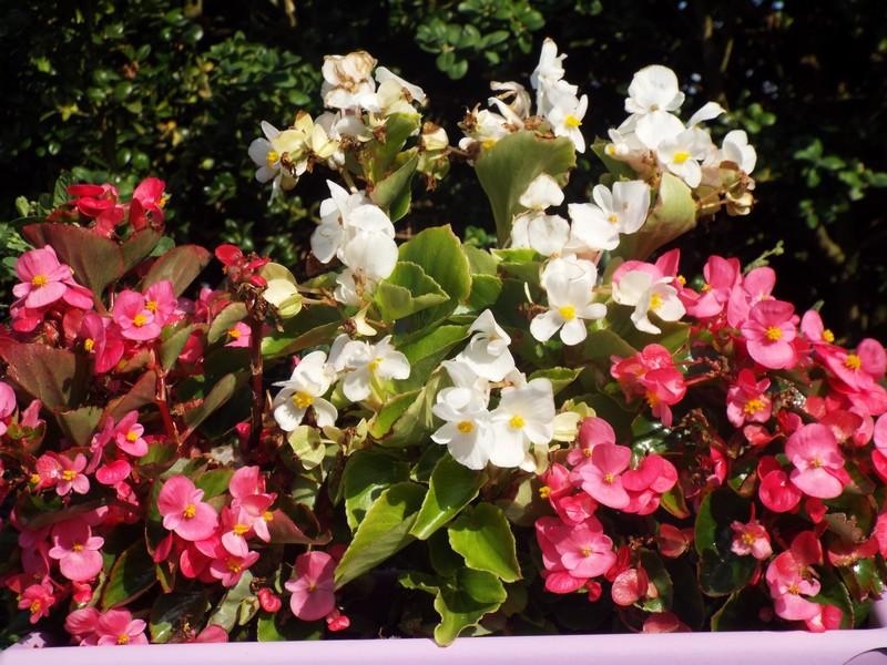 Fleurs aoûtiennes ...