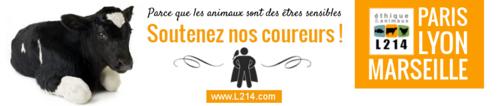 Course des héros, dimanche 22 juin 2014 au parc de Saint-Cloud (92)