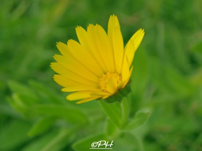 Fleurs sauvages d'hiver
