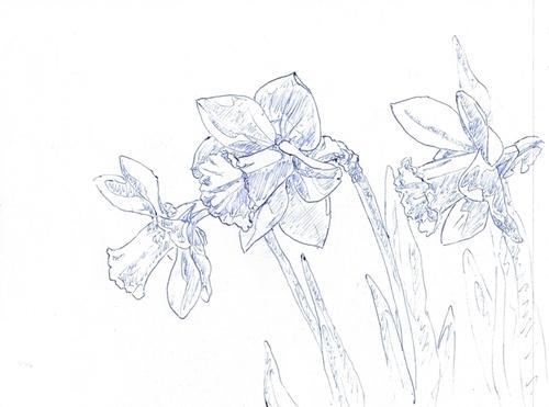 Croquis de fleurs (partie 11/17 du carnet de croquis)