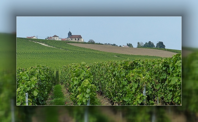 Terroir Champenois