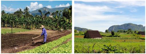 Cuba: socialisme, science et agriculture