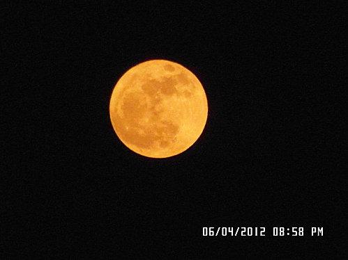 merle-lune-007.JPG