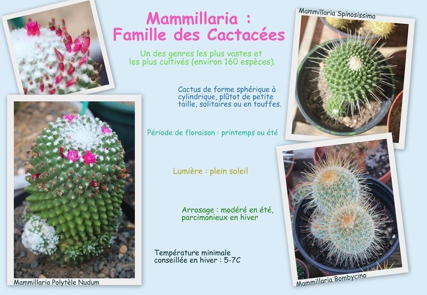 Mammillaria - Culture et Entretien