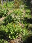 jardin_de_Liza